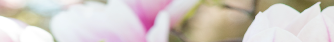 Pink & Green Flowers Banner.png